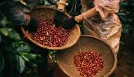 Nâng tầm cà phê Việt