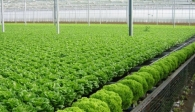Nông nghiệp 2019 có thể tụt dốc