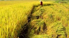 Trung Quốc tăng nhập nông sản Việt