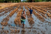 Scientists Help Vietnam's Rice Farmers Adapt To Climate Change, Amid Major Drought