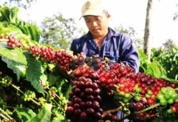 Giải pháp đưa cà phê Việt vượt qua cuộc khủng hoảng về giá