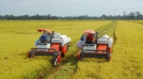 Thị trường tuần qua: Giá lúa ổn định, cà phê tiếp tục quay đầu giảm